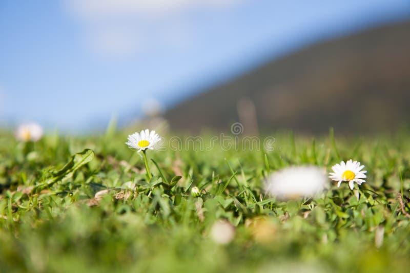 Macro photo des fleurs dans l'herbe photo libre de droits