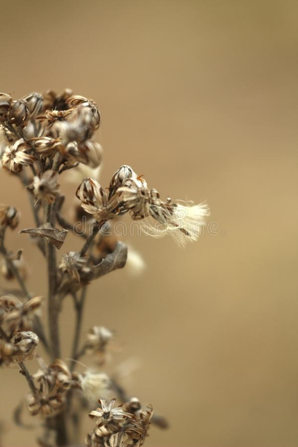 Macro photo of dry flowers grass on blurred brown stock images