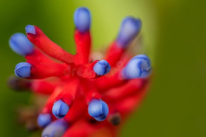 Macro photo of the exotic flower royalty free stock photos