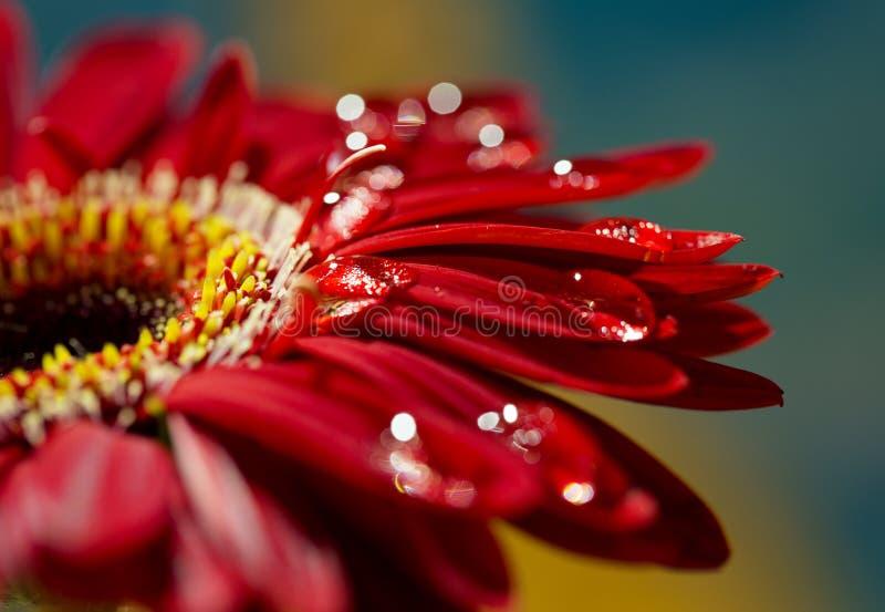 Macro photo of flower stock image
