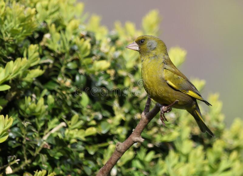 Macro Photo of Green Bird Perched on Tree Branch royalty free stock photo