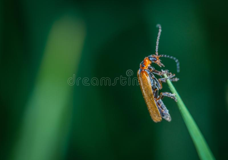 Macro Photo Of Insect stock photos
