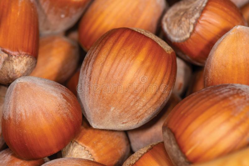 Macro photo of an inshell hazelnut on a background of scattered nuts by a large stall. Background texture stock photos