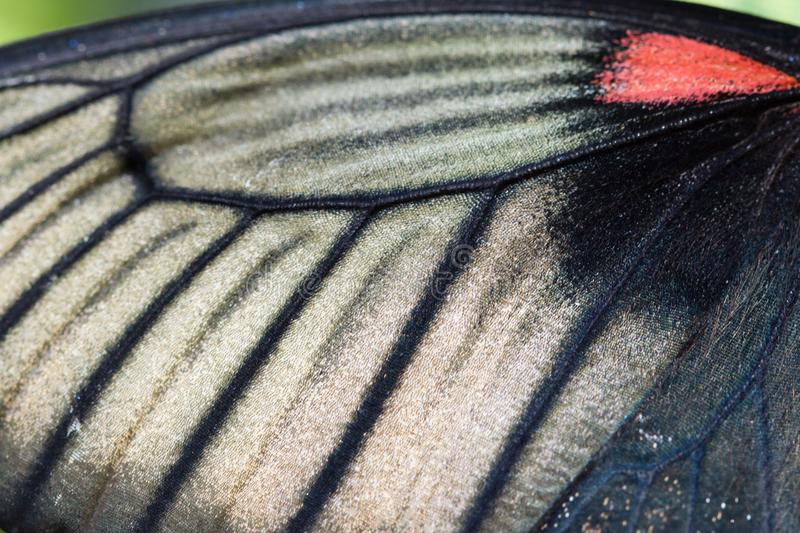Macro photo of morpho butterfly wing bottom side royalty free stock image