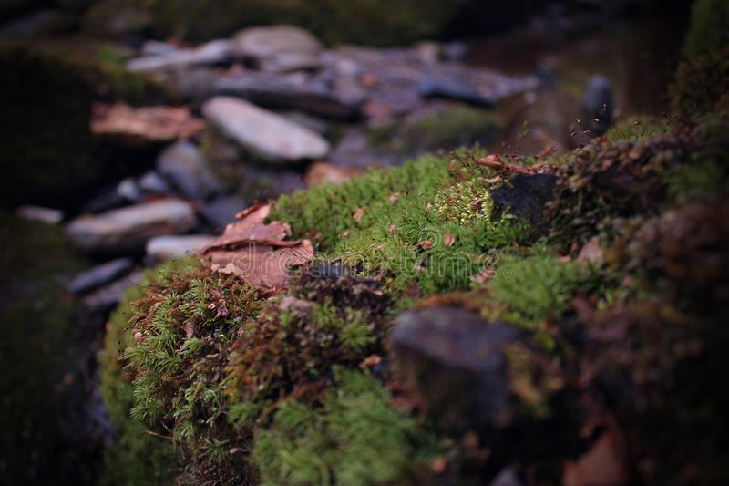 Macro Photo of Moss Growth on a River Rock. In the Mountains stock images