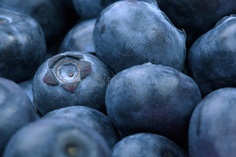 Macro photo of organic and sweet blueberries as a background. Healthful and fresh berries for desserts or smoothies. royalty free stock photo