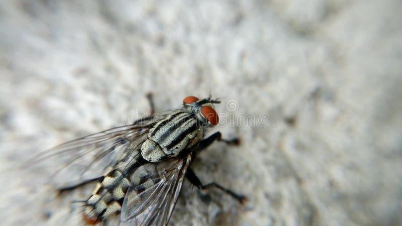 Macro photo of small fly. stock photography