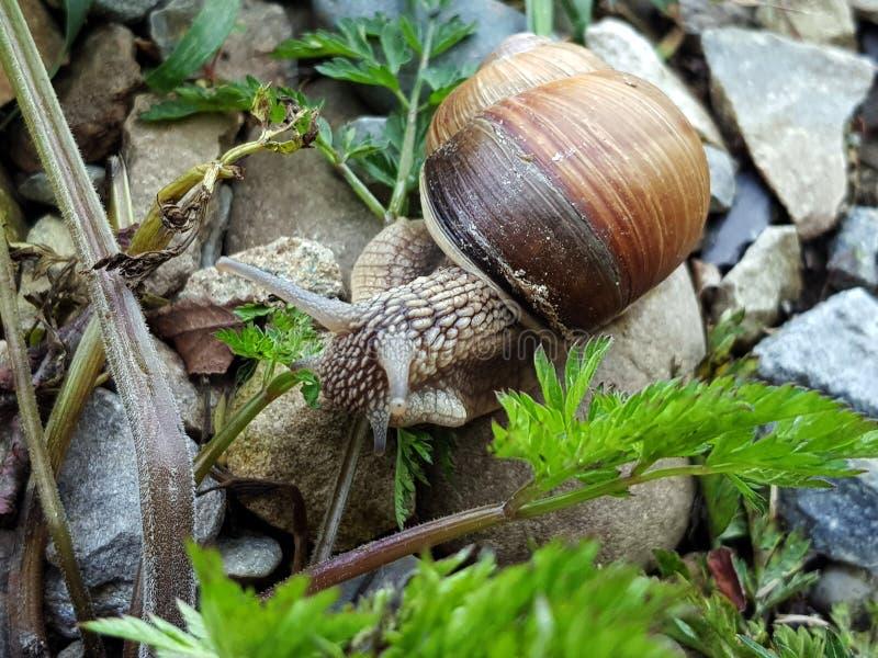 Macro photo of snail in green grass. Macro photo of snail in green stock photo