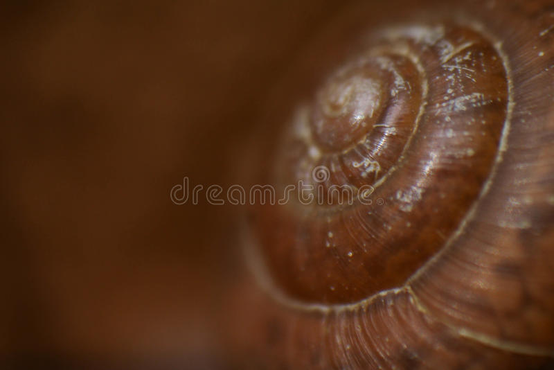 Macro photo of a snail shell. Macro photo of snail shell on brown background stock photo