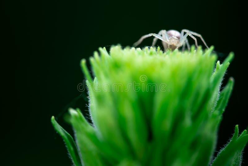 4 800 Arachnida Photos Free Royalty Free Stock Photos From Dreamstime