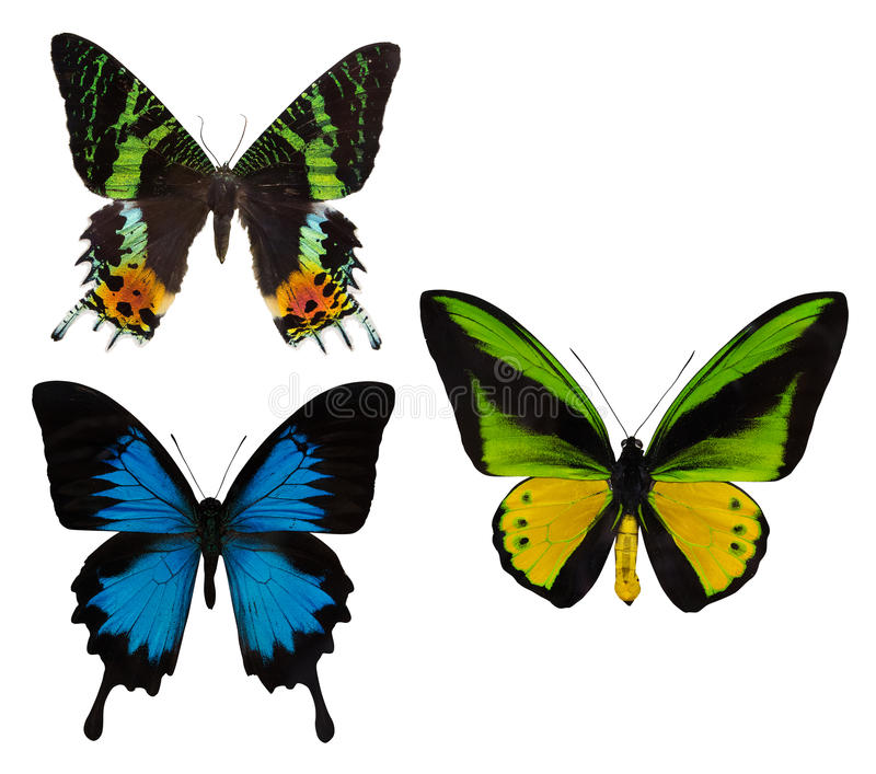 Macro photo of three tropical butterflies on white royalty free stock images