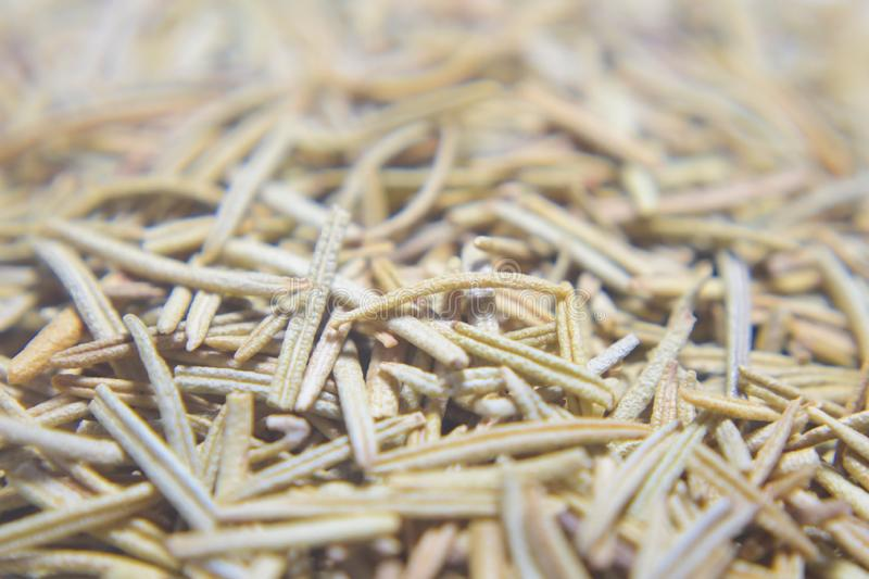 Dried rosemary leaves stock image