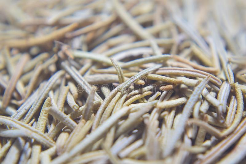 Dried rosemary leaves royalty free stock images