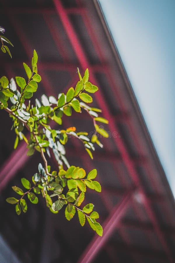 Macro Photograph of Green Leaf stock photo