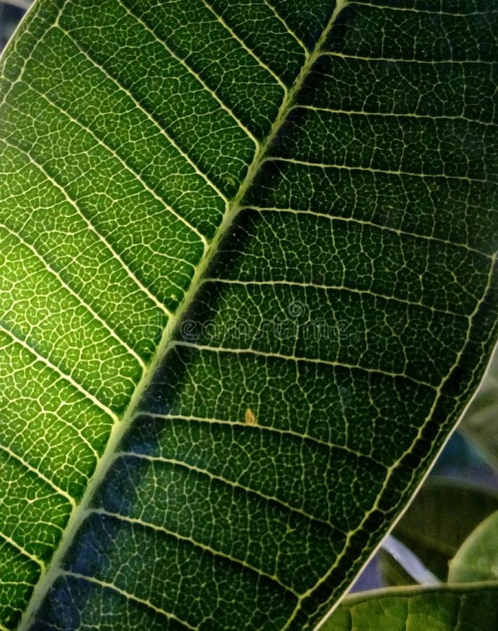Macro photograph of a leaf stock image