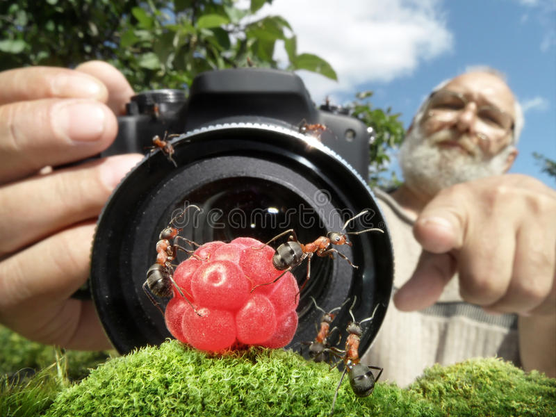 Macro photographer managing ants. Focused on ants stock photo