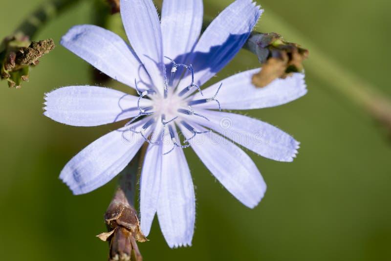 Download Macro Photographie D'une Fleur Photo stock - Image du centrale, normal: 77162904