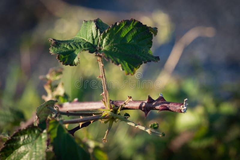 Macro photographie de branche avec la feuille image stock