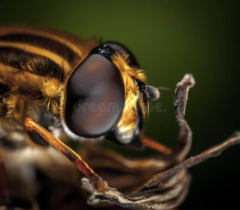 Macro Photography of Bee stock images