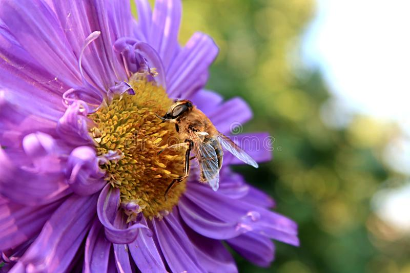 Macro Photography of Bee on a Flower stock photo