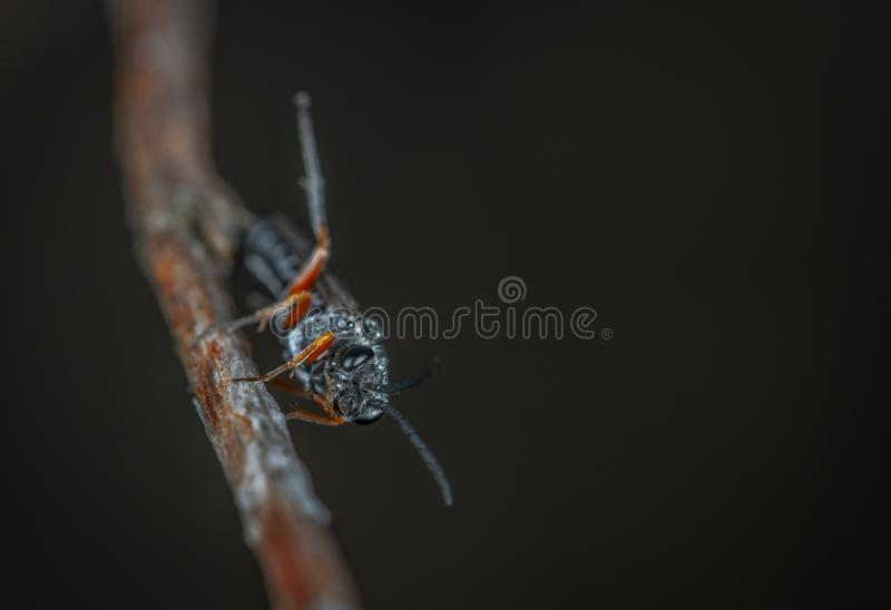 Macro Photography of Black Insect on Brown Twig royalty free stock photo