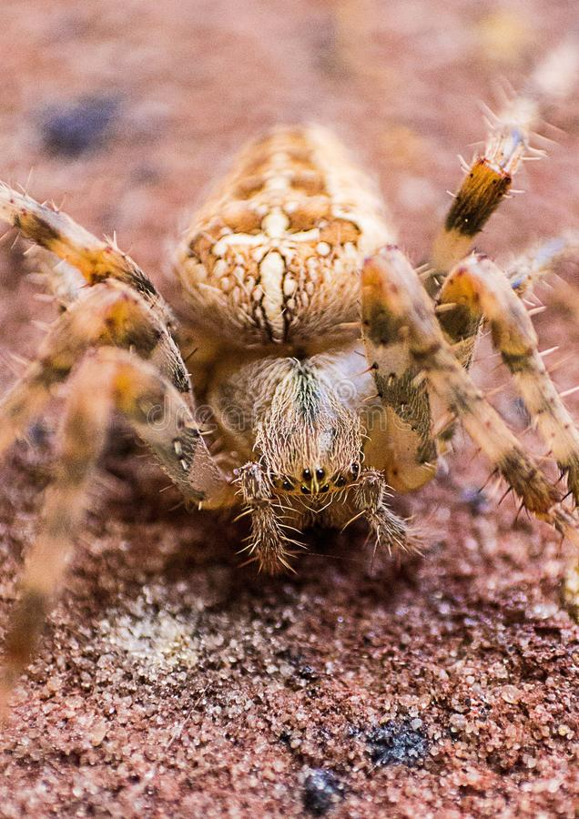 Macro Photography of Brown Barn Spider stock photo