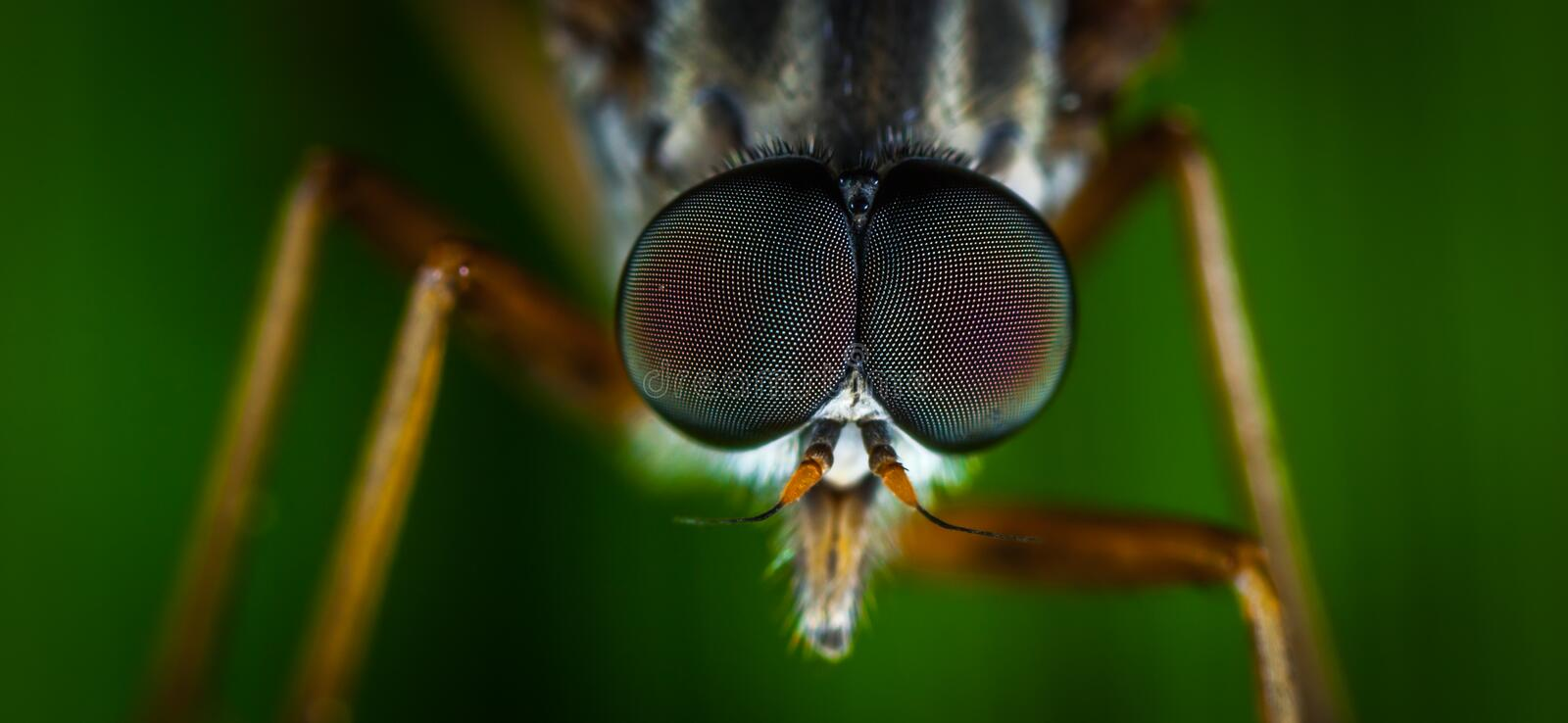 Macro Photography of Brown Fly royalty free stock photos