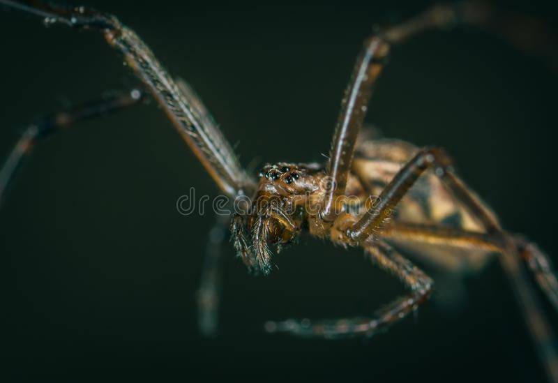 Macro Photography of Brown Spider stock images