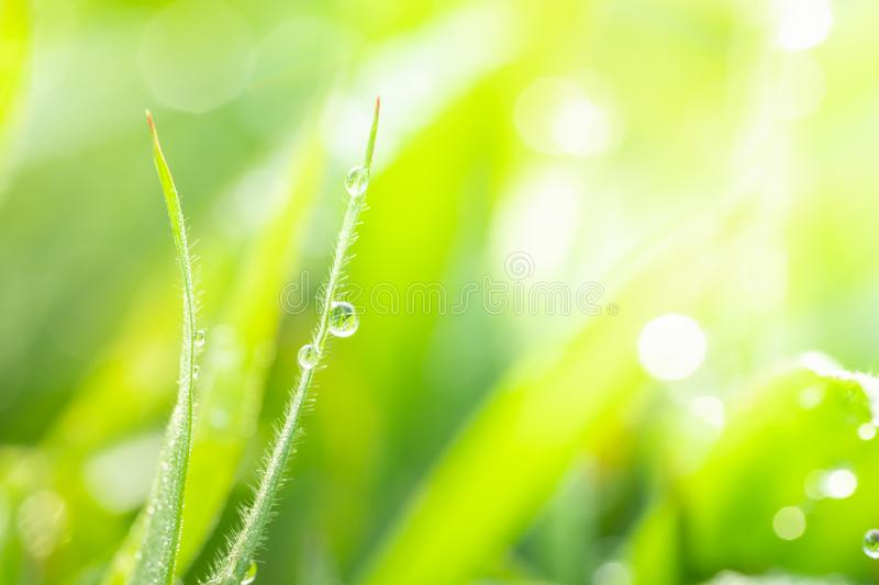 Macro photography of dewdrops on green grass in the morning. Macro photography of dew drops on green grass in the morning. Green nature background with copy stock photos