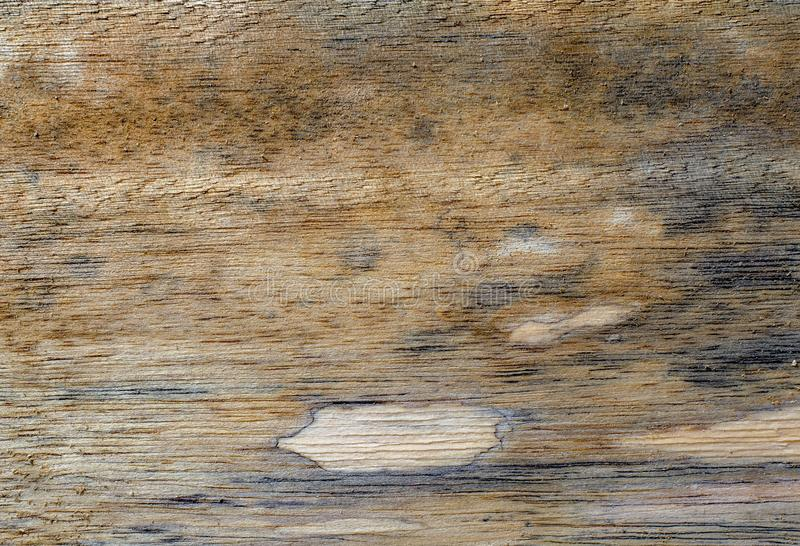 Different wood textures and backgrounds III stock photography