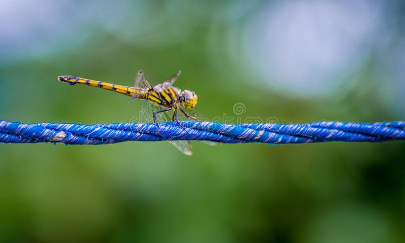 Macro Photography of a Dragonfly stock photos