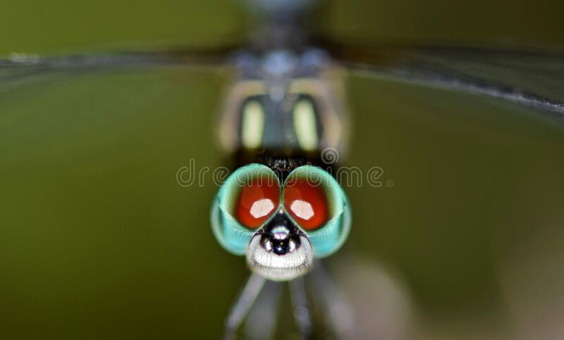 Macro Photography of Dragonfly royalty free stock photos