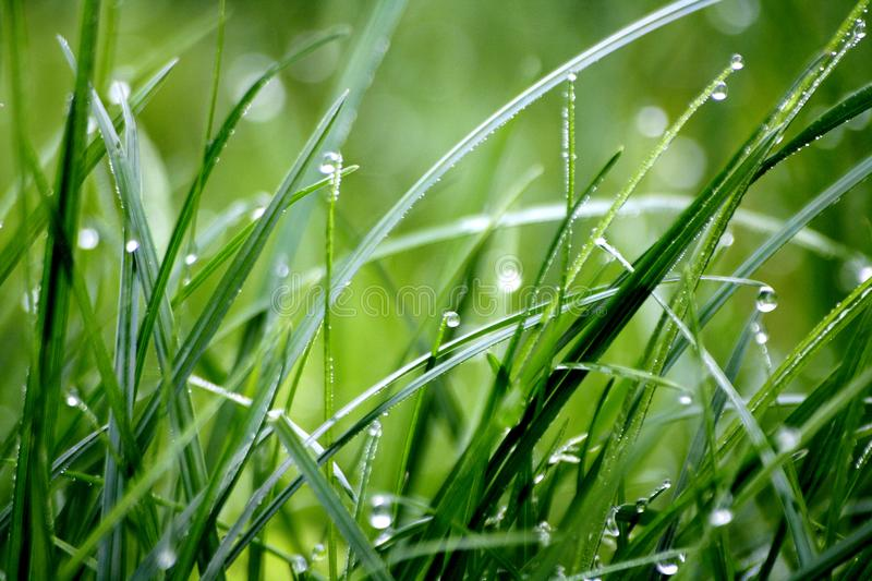 Macro Photography of Droplets on Grass stock photos