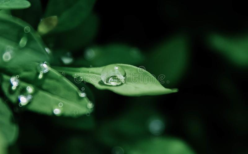 Macro Photography of Droplets on Leaves royalty free stock images