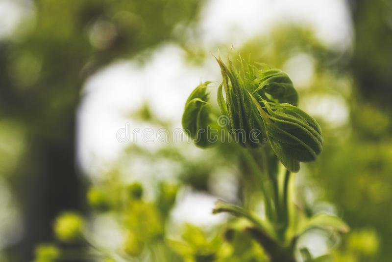 Macro Photography of Flowers Buds stock photos