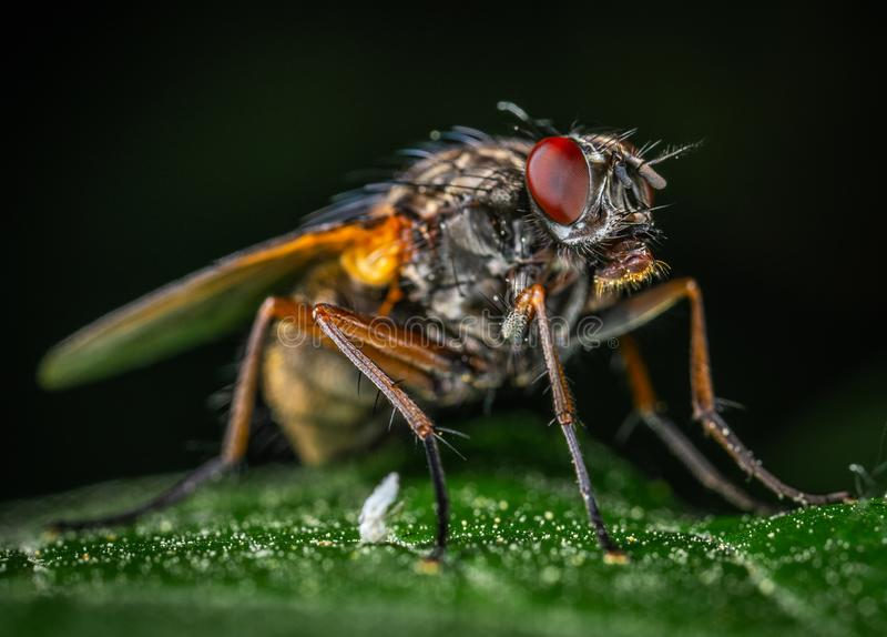 Macro Photography of Gray Fly stock images