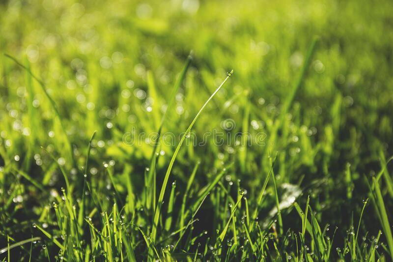 Macro Photography of Green Grass Field With Rain Drops royalty free stock image