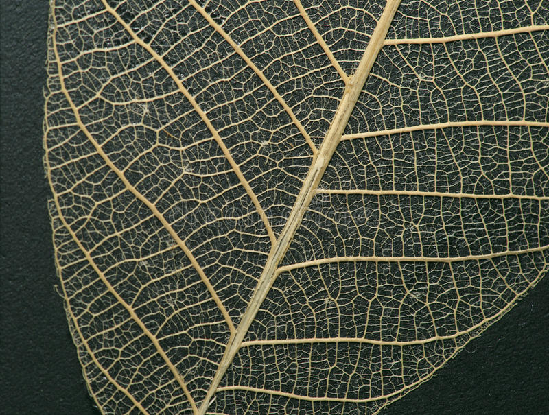 Macro photography green leaf. Macro photography of green leaf royalty free stock image
