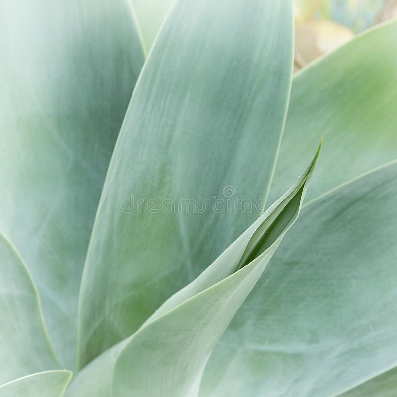 Macro Photography of Green Leaf Plant stock photography