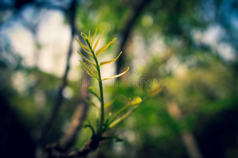Macro Photography of Green Leaf Plant stock photos