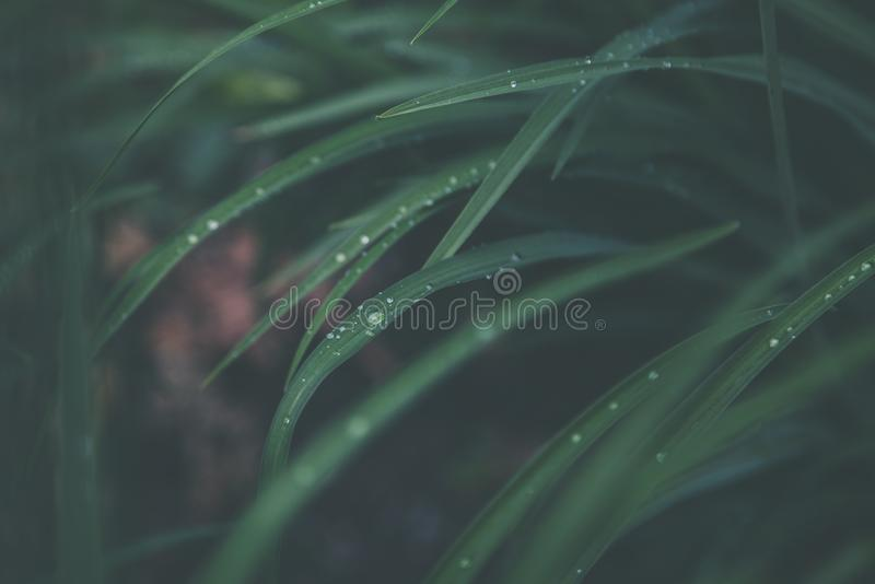 Macro Photography of Green Linear Leaf stock photography