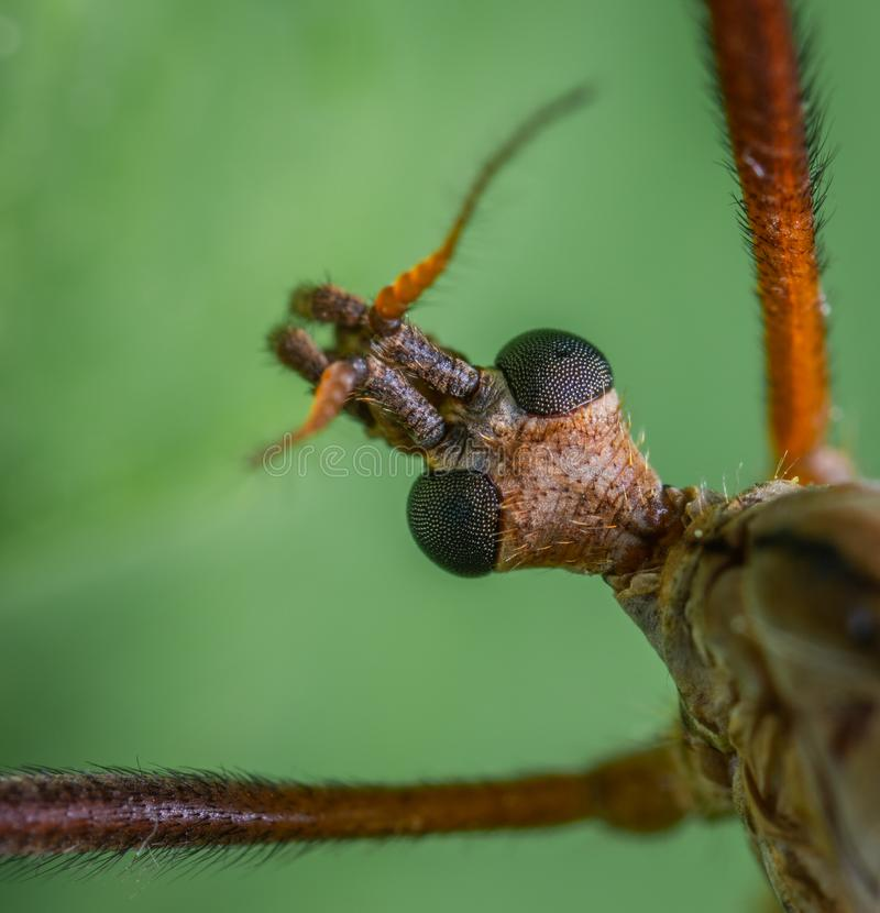 Macro Photography Of Insect stock photography