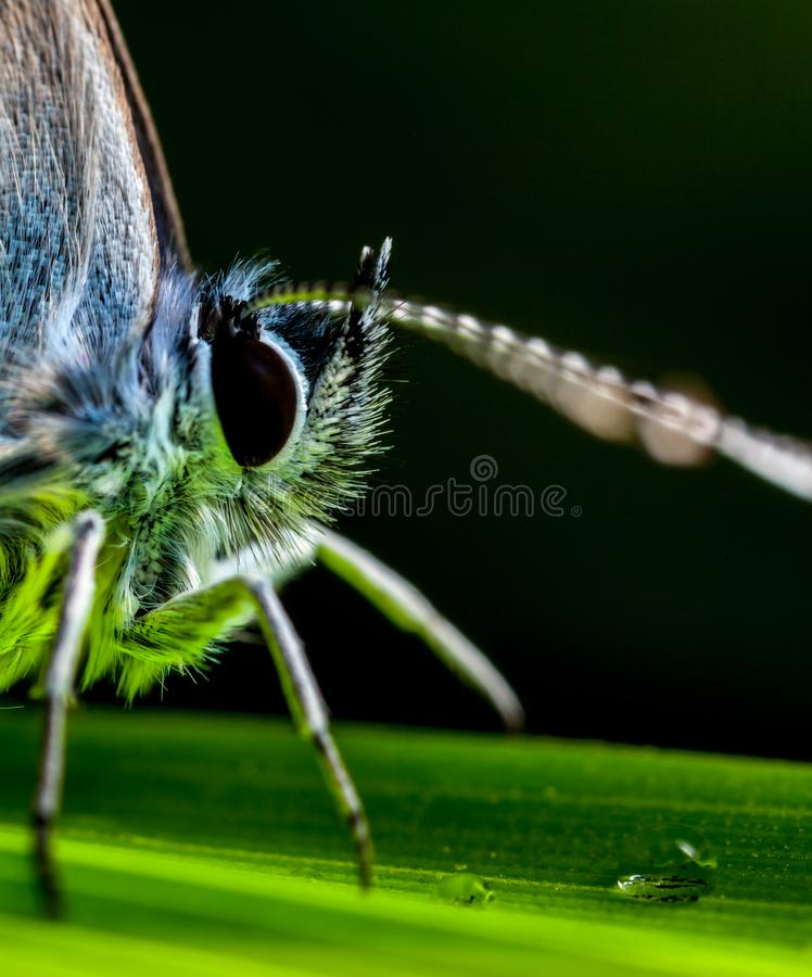 Macro Photography Of Insect Perched On Green Leaf stock photos
