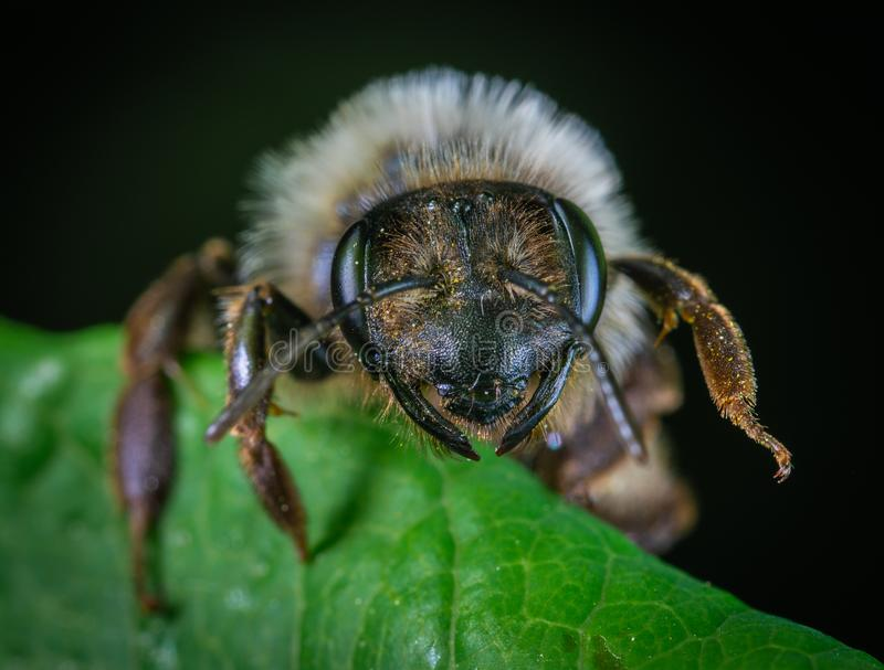 Macro Photography Of Insect Perched On Leaf royalty free stock photo