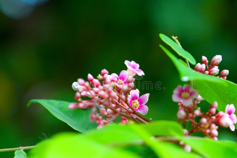 Macro photography for nature stock image