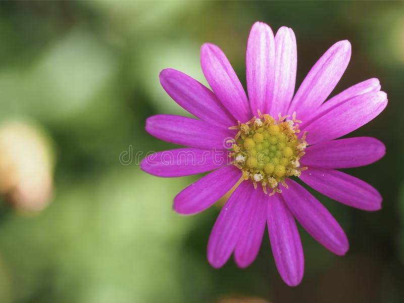 Macro Photography of a Pink Flower stock photography