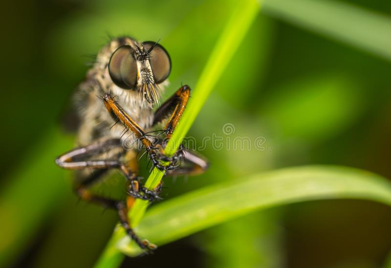 Macro Photography of Robber Fly Perched On Green Leaf stock photos
