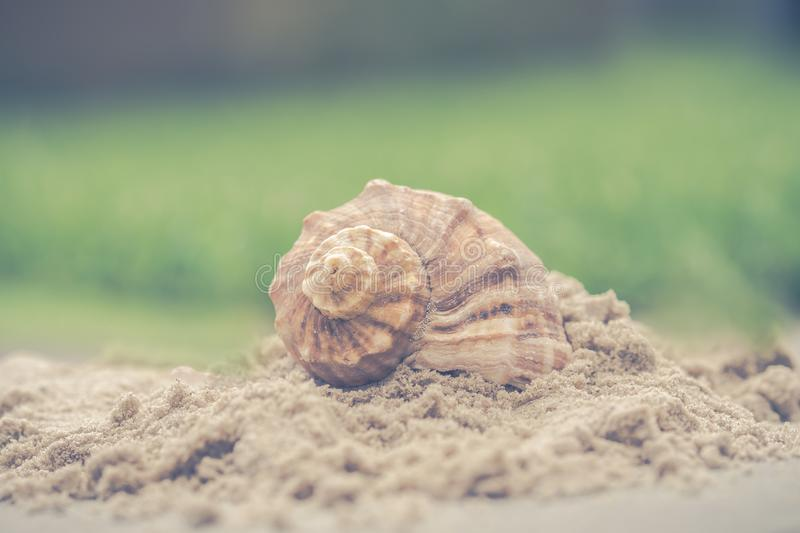 Macro Photography of Shell on Sand royalty free stock photo