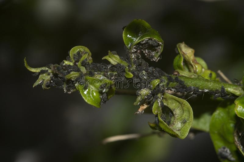 Macro photography shot of a branch of a tree with damaged leaves on blurred background. A macro photography shot of a branch of a tree with damaged leaves on royalty free stock images
