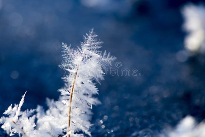 Macro Photography of Snowflakes stock photo
